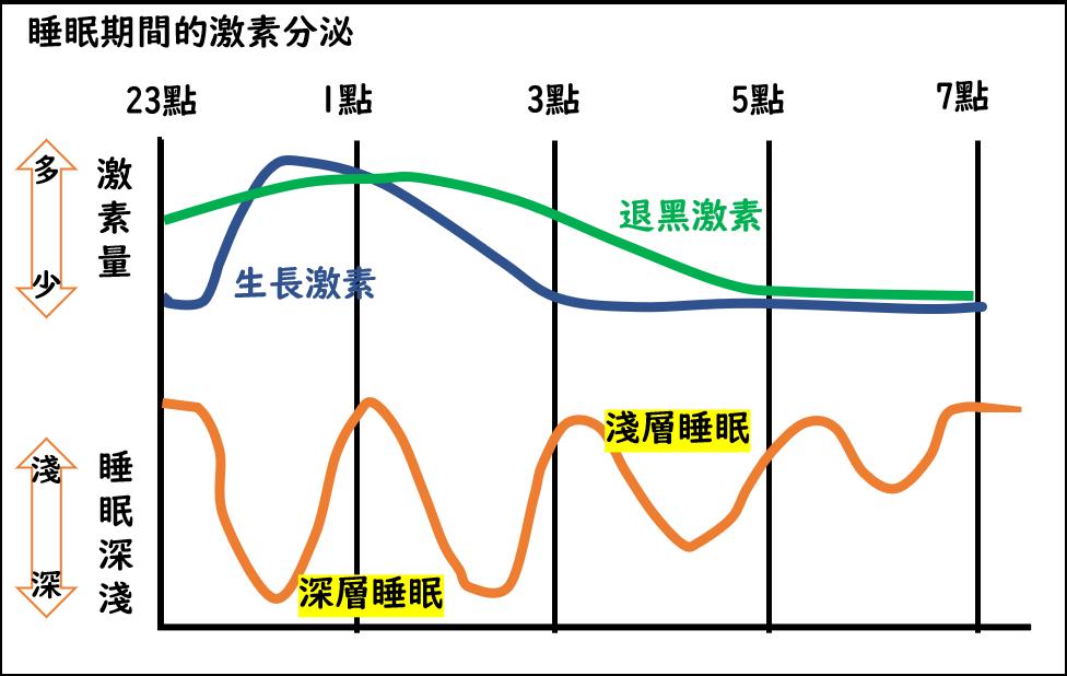 睡眠期間激素分泌示意圖